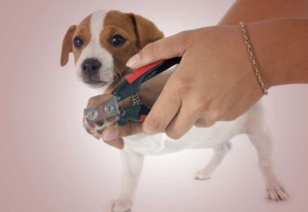 Top 5 Best Dog Nail Clippers with Sensor