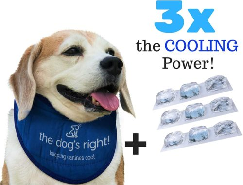 The Dog's Right! Dog Cooling Collar Bandana (Size 14 to 16 inches, Adjustable for Medium Sized Dogs)